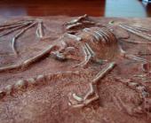 Dragon fossil sculpture bottom view