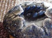 Black Baby Dragon Hatchling Sculpture in Grey Speckled Egg